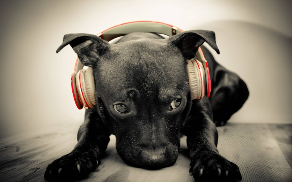 dog-headphones